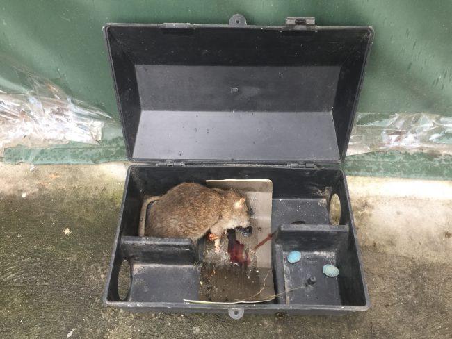 Hộp bẫy chuột thông minh