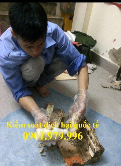 Diệt mối tại Hà Giang
