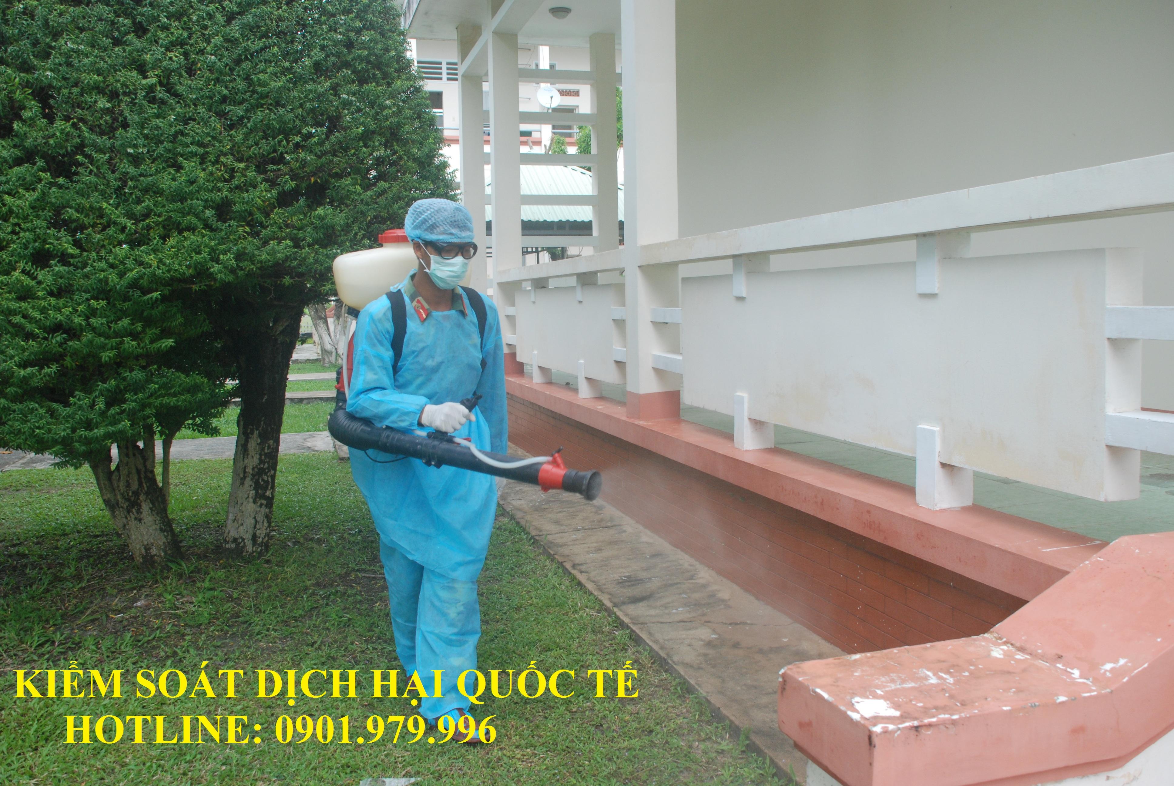 Dịch vụ phun muỗi, diệt côn trùng hiệu quả tại quận Ba Đình