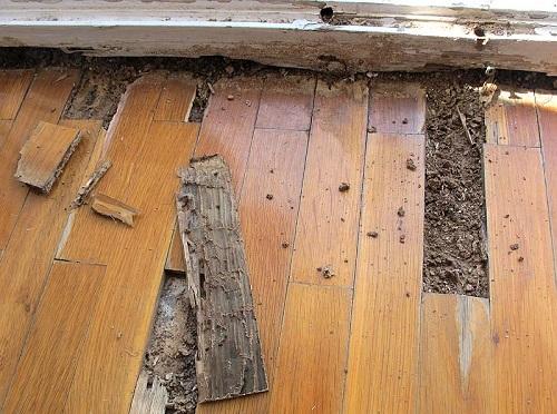 Mối phá hoại nhiều tài sản bằng gỗ