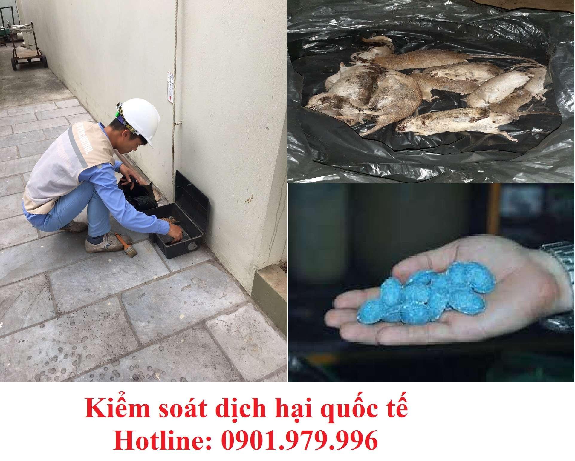 Dịch vụ diệt chuột hiệu quả- Công ty diệt chuột chuyên nghiệp